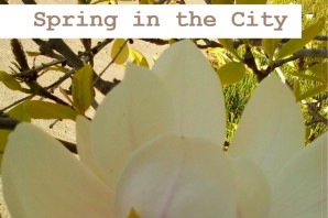 Spring 2019 YUSAPUY Newsletter